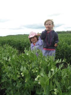 Girls in Pea Patch